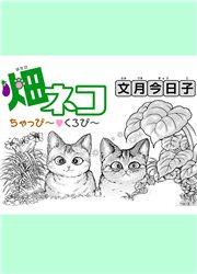 畑ネコちゃっぴ〜▼くろぴ〜